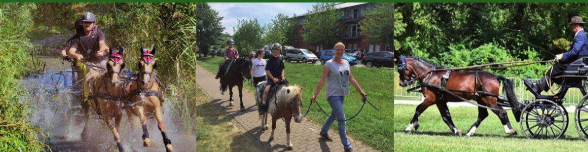 Pferdefreunde-Meißenheim